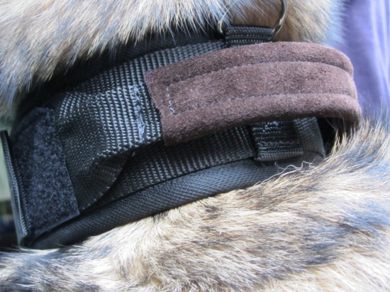 Hetzhalsband aus softigem Nylon mit patentiertem Cobra -Belt Verschluss