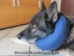 Hundekragen aufblasbar Grösse L