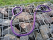 Retrieverleine Freestyle mit Stopring violet