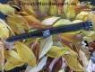 Schweißhalsung Leder braun 40cm